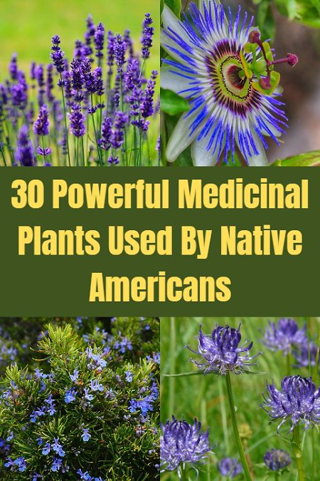 30 Powerful Medicinal Plants Used By Native Americans