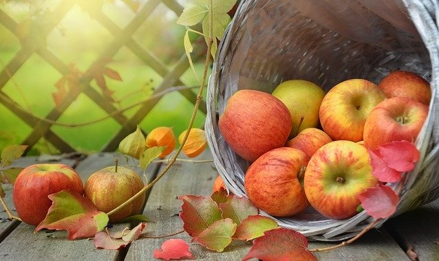 Apples in a basket with autumn leaves and a garden in the background.